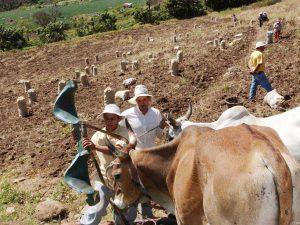 Producción en San Martín se incrementó en 5%
