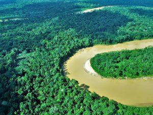 Programa Bosques abarcará a 200 comunidades nativas a fin de año