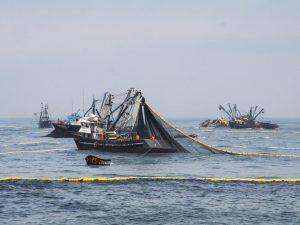 Refuerzan conservación de recurso anchovetero