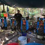 Vraem: Policía incinera más de una tonelada de droga química