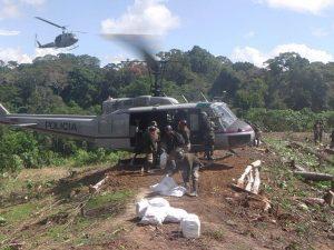 Alto Huallaga: Erradican 12 450 hectáreas de hoja de coca ilegal