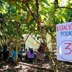 Divulgan conocimientos prácticos para manejo tecnificado de cultivos de cacao