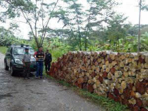 Leoncio Prado: Policía interviene producto forestal