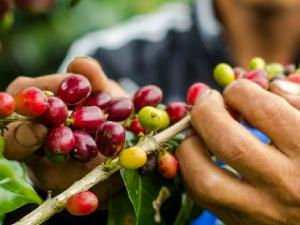 Mostrarán potencial de áreas naturales protegidas de la selva en Expoamazónica 2017