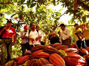 Organizaciones cacaoteras del Alto Huallaga presentes en Expoamazónica 2017