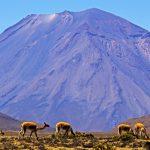 Reserva Nacional Salinas y Aguada Blanca cumple 38 años