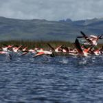 Reserva Nacional de Junín contará con parque temático turístico