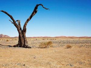 Preparan conferencia mundial en Brasil sobre la restauración ecológica