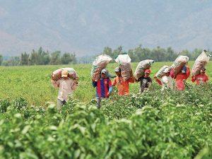 Privilegian créditos a segmento minorista en el sector agrícola