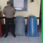 Decomisan 100 kilos de hoja de coca en Tingo María
