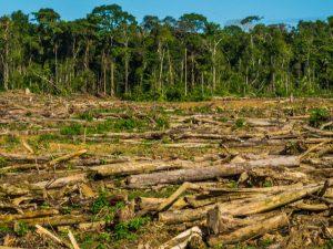 Se perdieron más de 160 mil hectáreas de bosques amazónicos en 2016