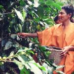 Divulgan procedimiento para afiliar comunidades al Programa Bosques