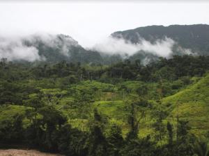 Entregaron tres perfiles de proyectos al FIP para el aprovechamiento sostenible de bosques