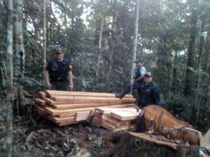 Huánuco: Inmovilizan producto forestal en José Crespo y Castillo