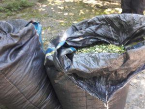 Leoncio Prado: Policía decomisa cargamento ilegal de hoja de coca
