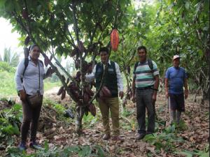 Pichari: Homenajearán al cacao vraíno