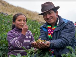 Agricultores de más de 20 regiones del país se alistan para Mistura 2017