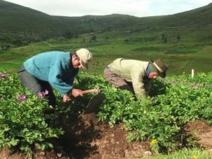 Impulsan uso de tecnología para fortalecer al agro nacional