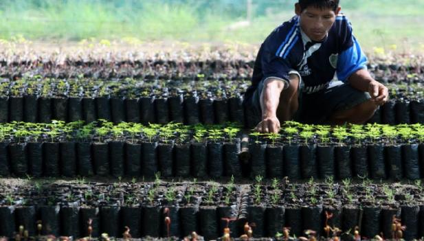 Gobierno dio duro golpe al narcotráfico — En el Vraem