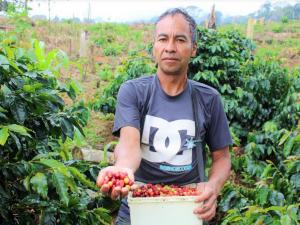San Martín: Producción del café experimenta mayor crecimiento desde 2015