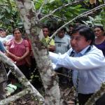 Vraem: Promueven tecnologías innovadoras en cacao