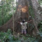 Árboles semilleros contribuyen a la conservación de bosques