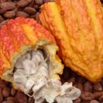 Expo Tocache 2017 promoverá consumo de café y cacao de la región San Martín