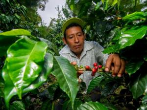 Fortalecen lucha antidrogas en la selva central