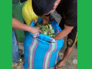 Leoncio Prado: Decomisan 70 kilos de hoja de coca