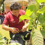 Leoncio Prado: Destinan un millón de soles para mejora producción cacaotera