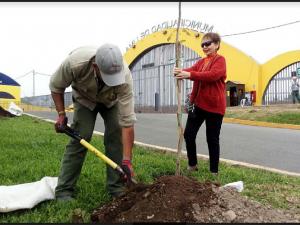 Plantan 50 árboles en el Parque de las Leyendas