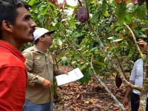Promueven seguro agrícola para cultivos de cacao