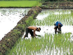 Optimizan servicios agropecuarios en San Martín