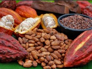 Consumo del cacao peruano da grandes beneficios a la salud