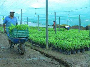 Entrega 50 mil plantones forestales en el Valle del Monzón