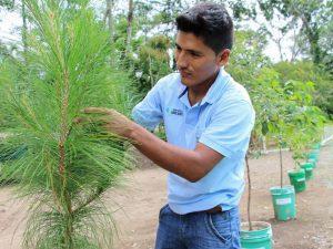 Ayacucho: Reforestarán 1 500 hectáreas de suelos degradados