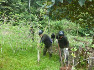 Corah erradicó 838 hectáreas de hoja de coca ilegal en Ucayali y Santa Lucía