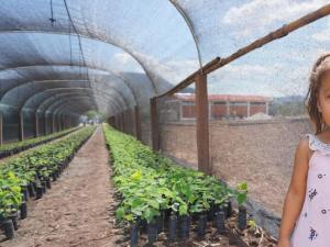 Minagri y comunidades produjeron nueve millones de plantones