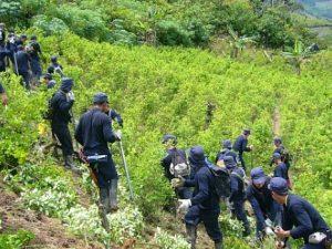 Plan de lucha contra la erradicación de coca ilegal en el Vraem