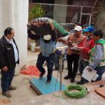 Adquieren más de 500 toneladas de papa en Huánuco y Apurímac
