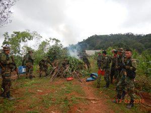 Junín: Destruyen 1 500 plantones de marihuana en Satipo