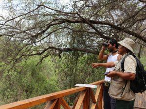Ofrecerán turismo vivencial en el Bosque de Pómac