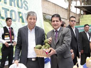 Alistan proyecto agrario con paltos en Huánuco