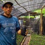 Huánuco: Inician plan nacional de renovación de cafetales en Leoncio Prado