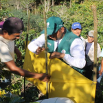 Impulsan capacitación para productores de café