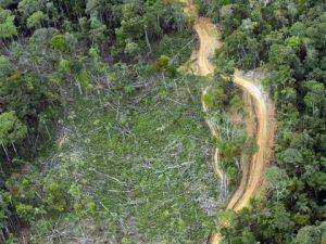 La tala ilegal: Crimen organizado que acaba con los bosques latinoamericanos