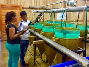 Loreto: Instalan 300 estanques para crianza y reproducción de peces
