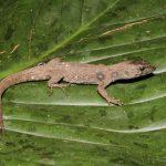 Vraem: Registran 35 especies de anfibios y 22 de reptiles