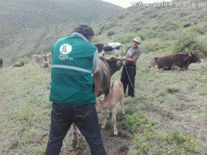 Ancash: Inician escuelas de campo de proyecto ganadero en Valle Fortaleza