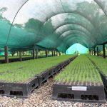 Recuperan con plantas nativas más de 49 mil hectáreas afectadas por el narcotráfico